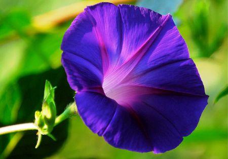الغار Laurel – هذه الزهور التي تنتمي ...